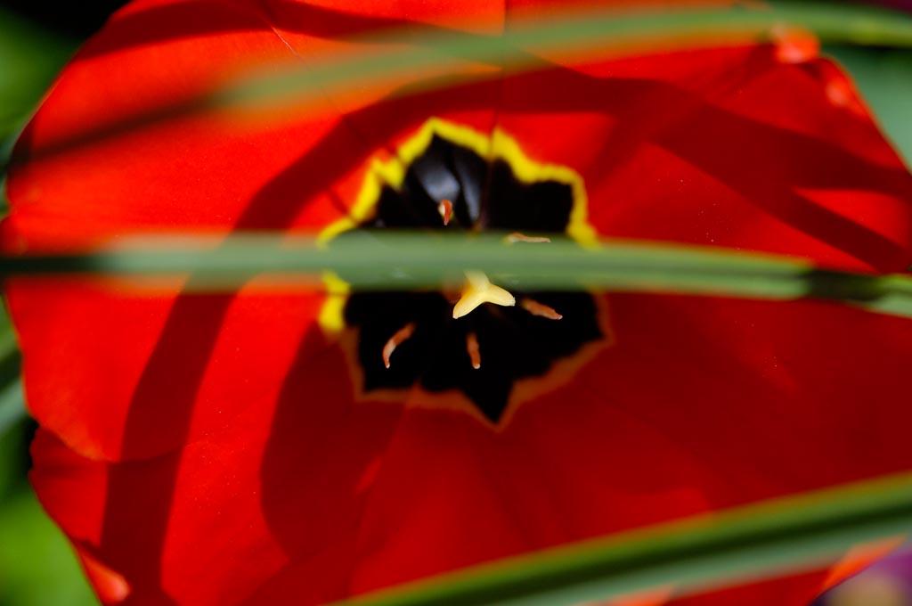 פרחים דונדי