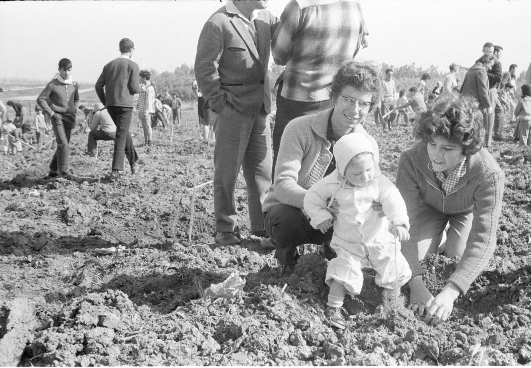 ט``ו בשבט 1964