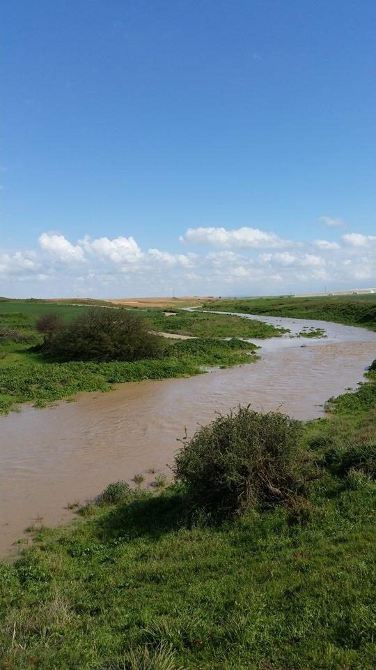 שפונות ולאחר הגשם 2.2015