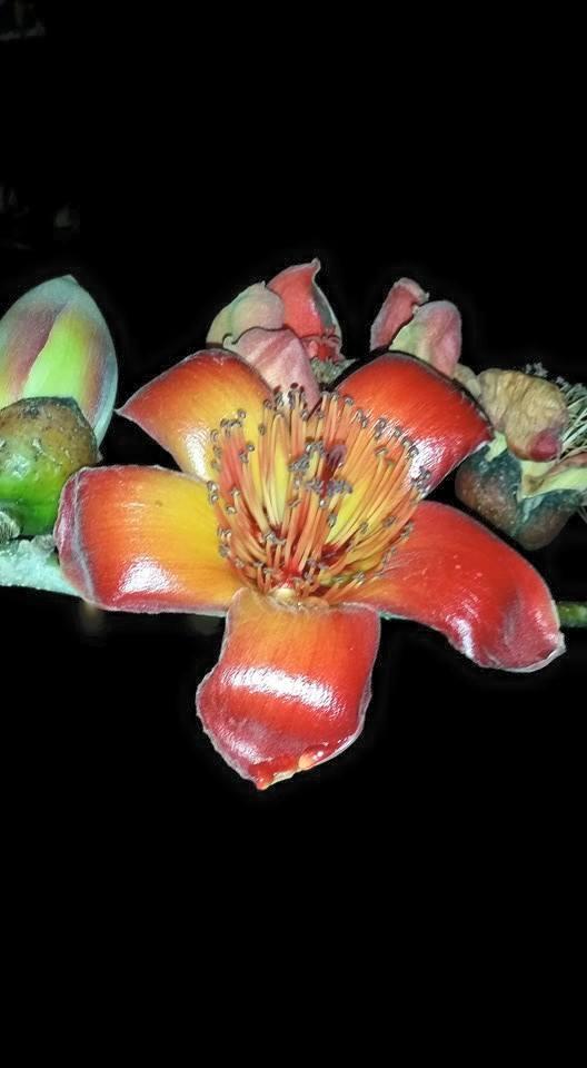 פרחים ונאות בארי